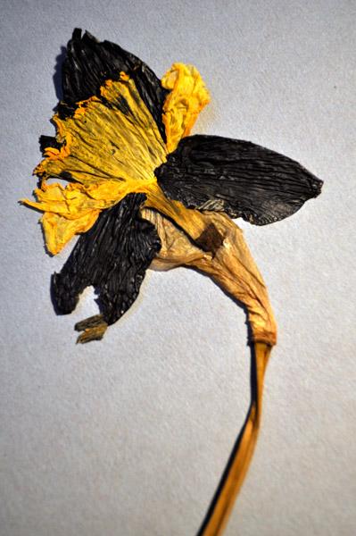 https://www.sarahhartwig.com/files/gimgs/th-9_9_nuclear-flower0008-1.jpg